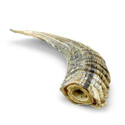 Small Lamb Horn w/ Marrow Single Count Loose (Display Refill) by Icelandic+