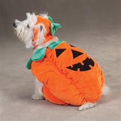 Zack & Zoey Pumpkin Pooch Costume