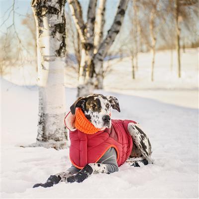 Scout Jacket by GF Pet