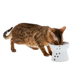Cat Design - Raised Cat Food Bowl - Large