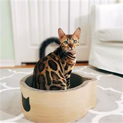 Cat-headed Scratcher Bed (Birch) - Medium