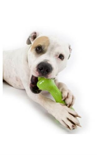 Orbee-Tuff® Bone by Planet Dog