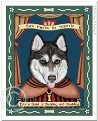 San Husky de Siberia - BLUE/BROWN eyes