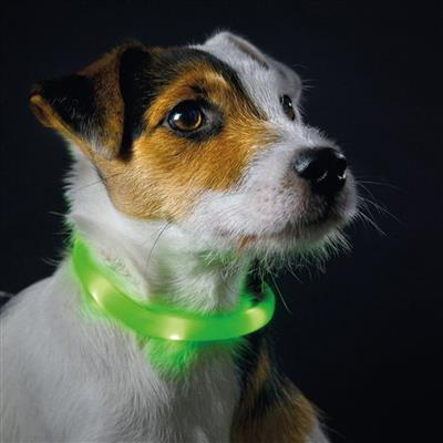Yukon LED Luminescent Tube for Dogs by HUNTER