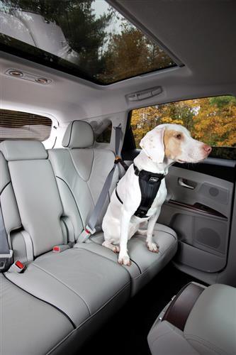 Seatbelt Tether w/Carabiner - Black