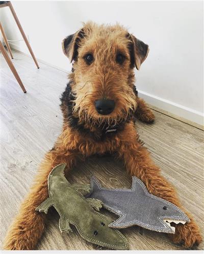 Shazza the Shark - Jute Toy