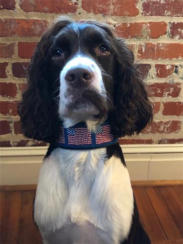 American Flag Collar & Leash Collection