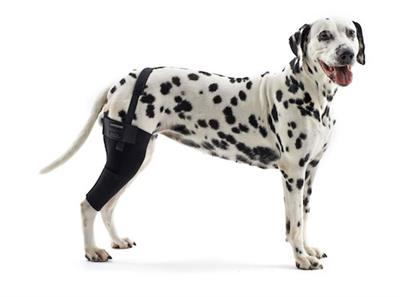 Rehab Knee Protector