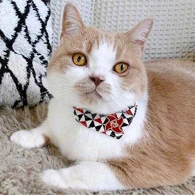 Ninja Cat Bandana Collar