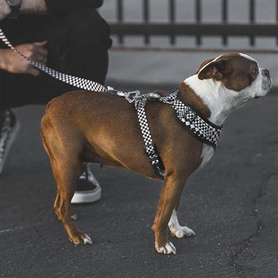 The Checkerboard | Leash