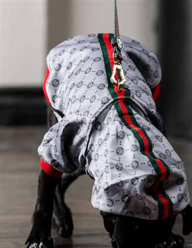 The G-Pattern Hoodie | Dog Clothing