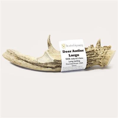USA Deer Antler - Large