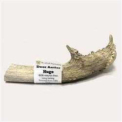 USA Deer Antler - Huge