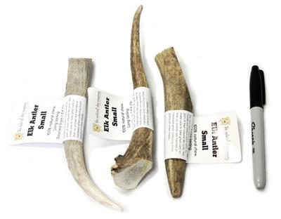USA Elk Antler - Whole Small