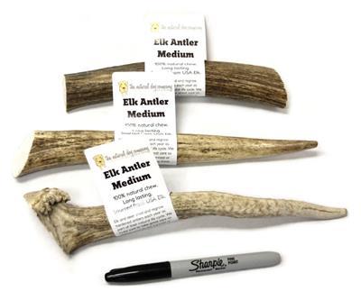 USA Elk Antler - Whole Medium