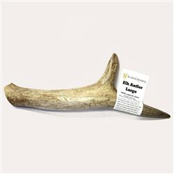USA Elk Antler - Whole Large