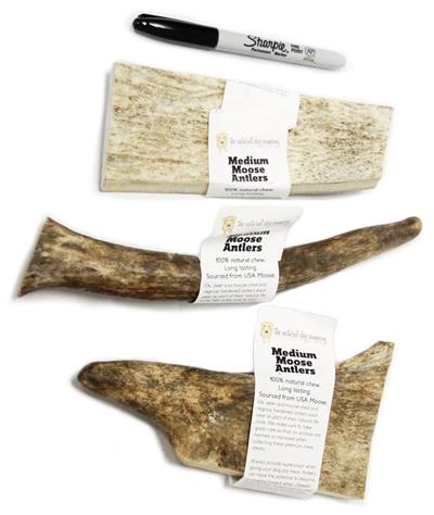 USA Moose Antler - Medium