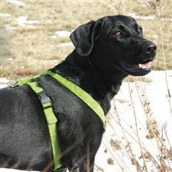 Hemp Dog Harness AVOCADO CORDUROY