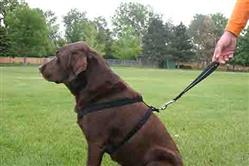 Hemp Dog Harness BLACK CORDUROY