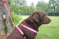 Hemp Dog Harness Pink Corduroy