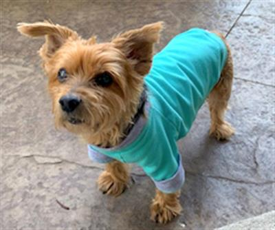 Apple Sweatshirt - Lt Pink
