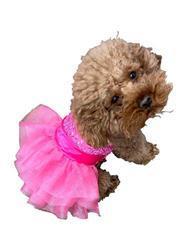 Zsa Zsa Dog Tutu Dress in Hot Pink