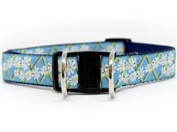 Daisy Dog Collar-Safety Buckle