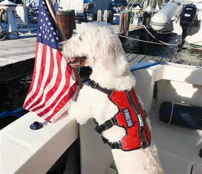 Galveston Bay Harness - Service Dog