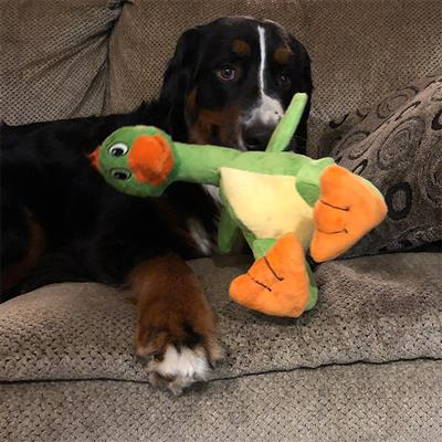 Tender-Tuffs Marine - Sitting Duck - Large Breed Toy