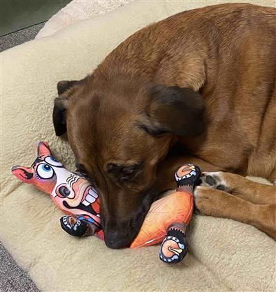 Horace Dog Toy - Barnyard Flops