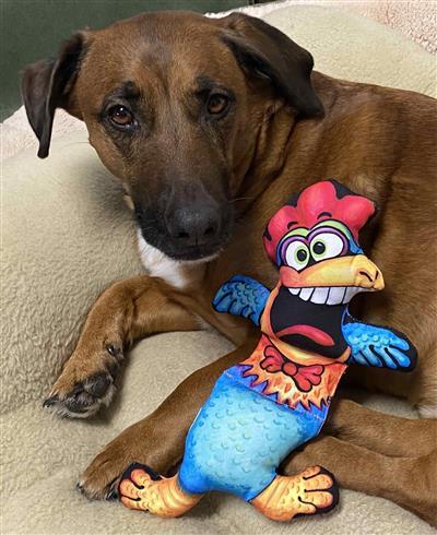 Roo Dog Toy - Barnyard Flops