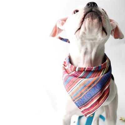 Playa Serape Beach Blanket Dog Bandana