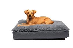 Dirty Dog Rectangle Beds