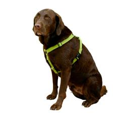 Hemp Basic Canvas Harnesses, Collars, Leashes GREEN