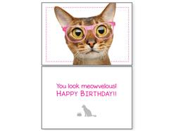 Cat Birthday – You Look Meowvelous(6 pack)