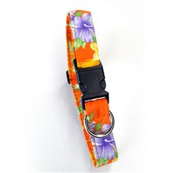 Island Dreams Orange Beach Dog Collars and Leashes