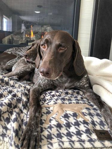 Tall Tails Houndstooth Dog Blanket
