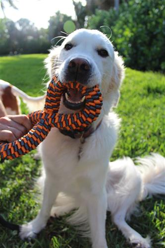 """Tall Tails Orange Braided Infinity Toy, 11"""""""