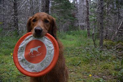 Tall Tails Orange Soft Flying Disc