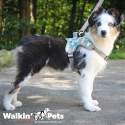 Walkin' Warrior Harness