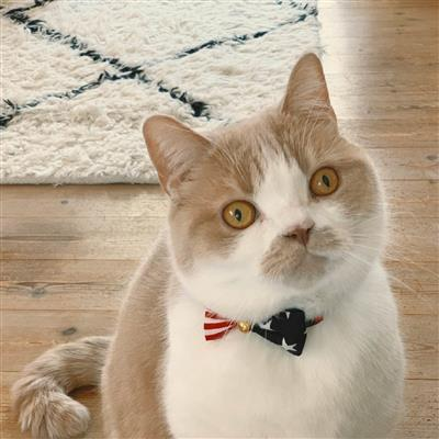 My Cat For President Collar
