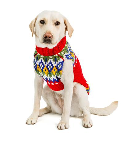 Holiday Fairisle Wool Dog Sweater
