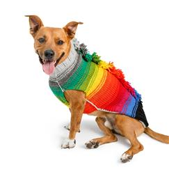 Rainbow Mohawk Dog Sweater