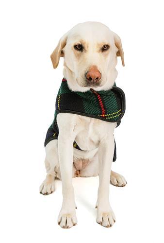 Navy Tartan Blanket Dog Coat
