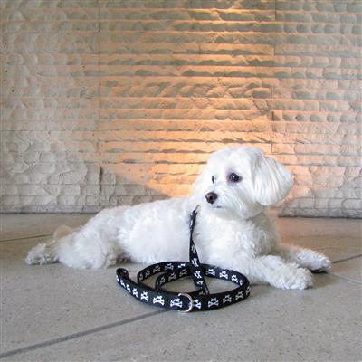 Wagberry Dog and Crossbones Leash