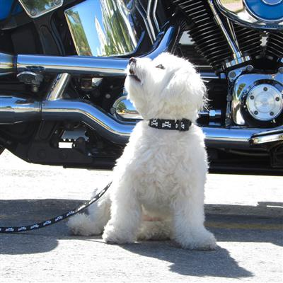 Wagberry Dog and Crossbones Collar