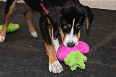 Duraplush Strawberry Dog Toy