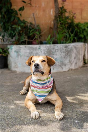 Siesta Dog Bandana