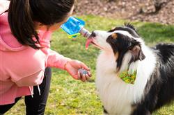 Vapur® EZ Lick™ Portable Dog Water Bottle-WATER BLUE