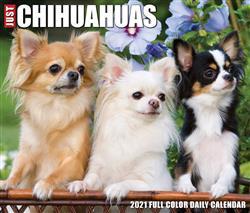 Chihuahuas 2021 Box Calendar